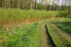 Plantation willow energy Stock Photography