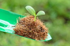 Plantation : Young plant over green background Royalty Free Stock Image