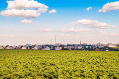 Plantation of young sunflowers. Belgorod skyline. Royalty Free Stock Images