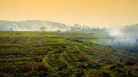 Plantations brûlantes en Afrique Images stock