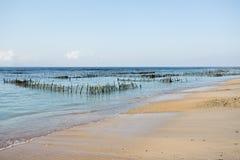 Plantations d'algue sur la plage rêveuse, algues à marée basse Images libres de droits