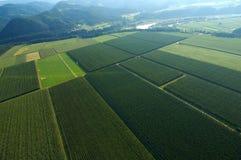 plantations d'houblon Photo libre de droits