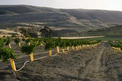 Plantations d'orange de l'Israël Photographie stock libre de droits