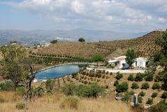 Plantations de finca et de mangue de pays, Axarquia, Espagne. Image stock