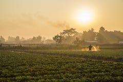 Plantations de fraise photos libres de droits