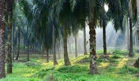 Plantations de palmier à huile Photographie stock libre de droits