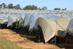 Plantations de serres chaudes Photographie stock libre de droits