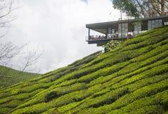 Plantations de thé photographie stock