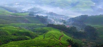 Plantations de thé au Kerala, Inde du sud image stock