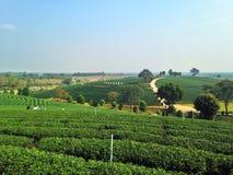 Plantations de thé dans Chiang Rai Photographie stock