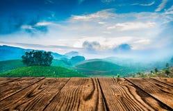 Plantations de thé dans l'Inde Images stock