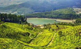 Plantations de thé de Munnar Photographie stock