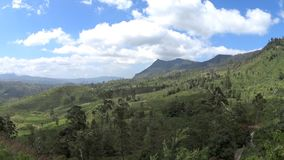 Plantations de thé du Sri Lanka banque de vidéos
