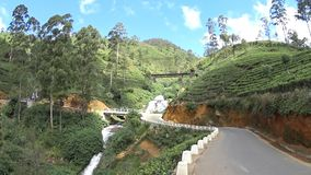 Plantations de thé du Sri Lanka clips vidéos
