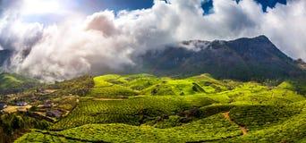 Plantations de thé en Inde Photos stock