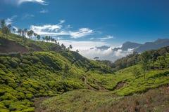 Plantations de thé dans Munnar, Kerala, Inde Images stock