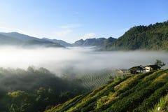 plantations et brouillard de thé dans les montagnes Doi Angkhang Photographie stock