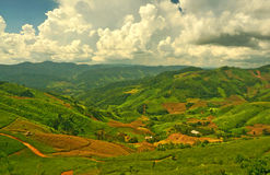 Plantations on Hill Slopes Stock Images