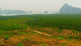 Plantations of oil palm tree rows are seen from above. Tropical landscape. View from the hill on the coast of the PhangNga Bay covered mangrove forest with high stock video footage