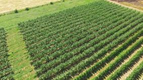 Plantations with orchards, aerial video. Aerial video of plantations with orchards stock video footage