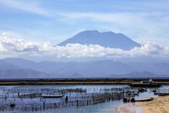 Plantations of seaweed in the background the volcano Agung, in Bali,  Nusa Penida, Indonesia. Royalty Free Stock Photography
