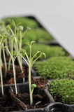 Plante Image stock