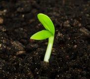 Plante Photos libres de droits