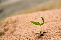 Plante Image libre de droits