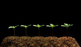 Plante Photo libre de droits