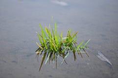 Plante aquatique photos stock