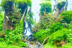 Plante aquatique image stock