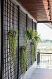 Plante cultivée dans un pot accrochant près du mur discordant en acier photos stock