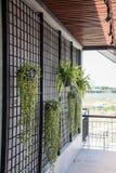 Plante cultivée dans un pot accrochant près du mur discordant en acier image stock