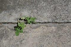 Plante cultivée du béton photo libre de droits