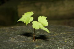 Plante d'arbre Images stock