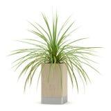 Plante d'intérieur dans le pot en bois d'isolement sur le blanc Photo libre de droits