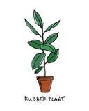 Plante d'intérieur tirée par la main Images libres de droits