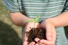 Plante dans des mains de l'enfant. Images libres de droits