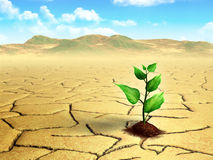 Plante dans le désert