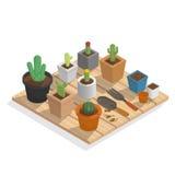 Plante el cactus en muchos pote en isométrico de madera Fotos de archivo libres de regalías