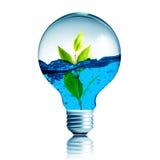 Plante el crecimiento con agua dentro de la bombilla Fotos de archivo libres de regalías