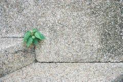 Plante el crecimiento de una cavidad en una pared de piedra, concepto de la vida, att Foto de archivo