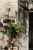 Plante el crecimiento en la pared Imagen de archivo libre de regalías
