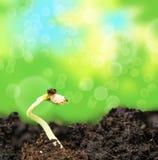 Plante el crecimiento en suelo Fotografía de archivo