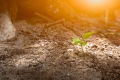 Plante el crecimiento en suelo y crezca el concepto Foto de archivo libre de regalías