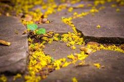 Plante el crecimiento a través de la grieta en el camino de piedra, pequeño anillo de las floraciones de la flor Imagenes de archivo