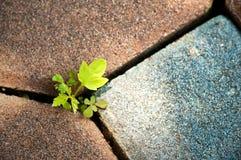 plante el crecimiento a través de la grieta en el concepto del pavimento de brea del negocio Foto de archivo libre de regalías