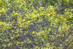 Plante el fondo de la textura, botanico del jardin, Valencia, España Fotos de archivo