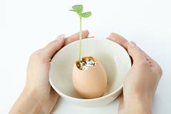 Plante el lanzamiento en cáscara de huevo en el cuenco ahuecado por las manos Imagen de archivo