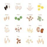 Plante el plano del icono de la semilla fijado con trigo del maíz de la calabaza Imagenes de archivo